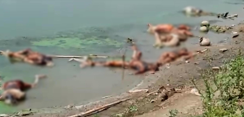 بکسر کے چوسہ گاؤں میں گنگا کے گھاٹ پر لاش۔ (فوٹو: پی ٹی آئی)